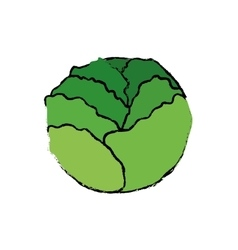 Fresh lettuce vegetable vector