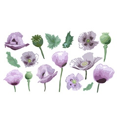 Hand drawn poppy set vector