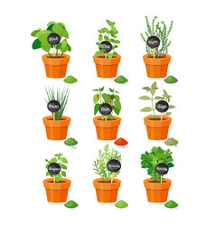 Set of useful herbs in brown pots with labels vector