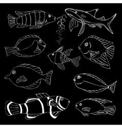 Sketch of sea fish vector