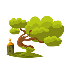 Green old oak bonsai miniature traditional vector