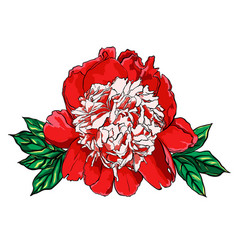 Hand drawn peony flower on vector