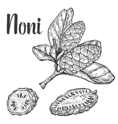 Noni camu fruit berry seed diet plant superfood vector