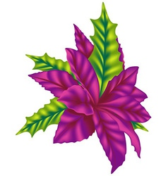 Violet Poinsettia vector image