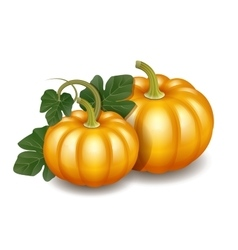 Two orange autumn pumpkins with green leaves vector