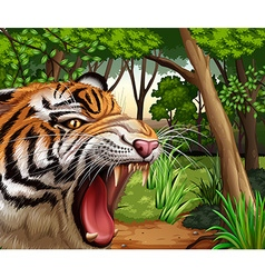 Tiger roaring in the jungle vector