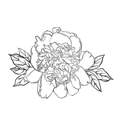 hand drawn peony lower on vector image vector image