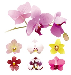 Realistic orchid flowers set vector