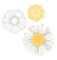 isolated chamomile daisy flowers white yellow set vector image