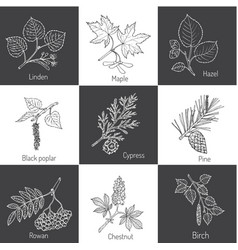 set of different tree branches vector image vector image