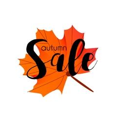 Autumn sae season design with maple leaf vector image