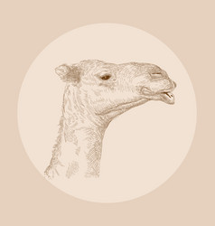 hand drawn camel head vector image