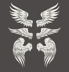 set of angelic or bird wings vector image