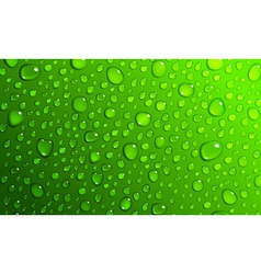 Green background of water drops vector