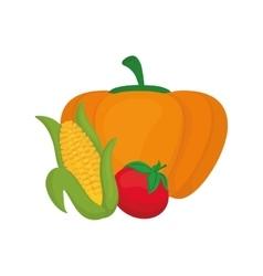 Fresh pumpkin corn and tomato vegetables vector