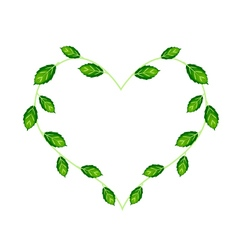 Sweet basil leaves and flowers in a heart shape vector