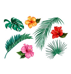 Tropical leaf monstera palm hibiscus set vector