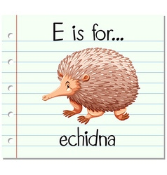 Flashcard letter e is for echidna vector