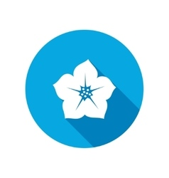Petunia flower icons floral symbol vector