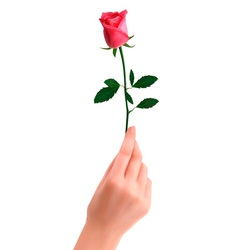 hand with rose vector image