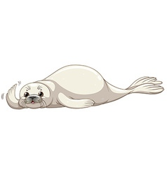 Seal with white skin vector image vector image