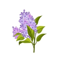 Lilac hand drawn realistic vector