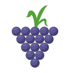 Grape grown organic fruit nature vector