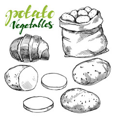 agriculture potatoes vegetable set hand drawn vector image