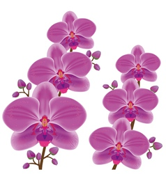 Exotic flower orchid vector image