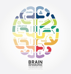 infographics brain design diagram line style vector image