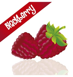 Blackberries isolated white background with and wi vector