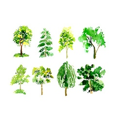 Collection of trees painted watercolor vector image vector image