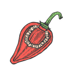 Hand drawn of red cut pepper sketch style doodle vector