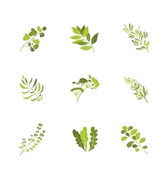 Herbs and spices icons cartoon vector