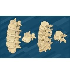 Human spine bones flat isometric vector image