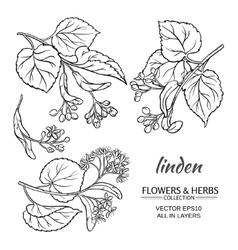 linden set vector image