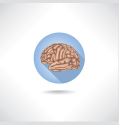 brain icon human organ anatomy medical sign vector image