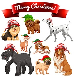 Christmas theme with dogs in elf hats vector