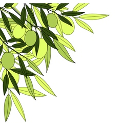Olives background vector