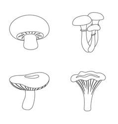 Champignon honey agarics russula chanterelle vector