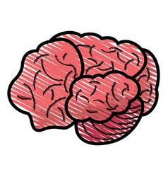 drawing brain human idea concept vector image vector image