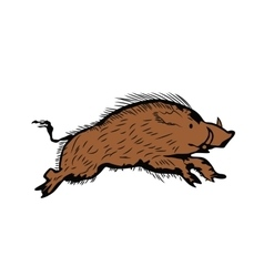 sketch of wild boar running vector image vector image