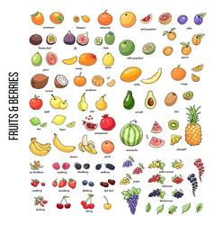 Fruitsshutter2 vector