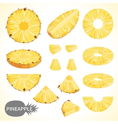 Fruit set of pineapple slice in various styles vector