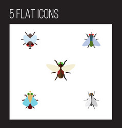 Flat icon buzz set of buzz fly bluebottle and vector