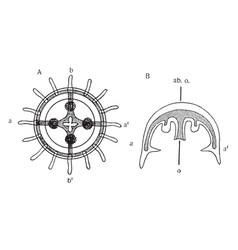 Medusa vintage vector