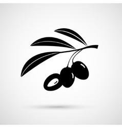 Olive oil decorative olive branch vector image