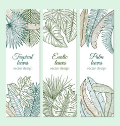 tropical plants with different leaves and branches vector image vector image