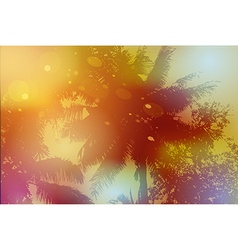 Sky palm trees sunset sun glare vector