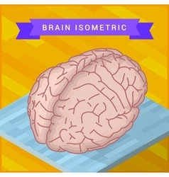 Human brain flat isometric icon vector